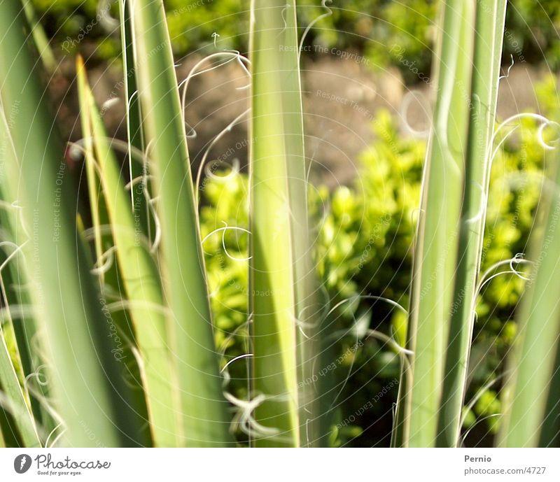 plant Plant Macro (Extreme close-up)
