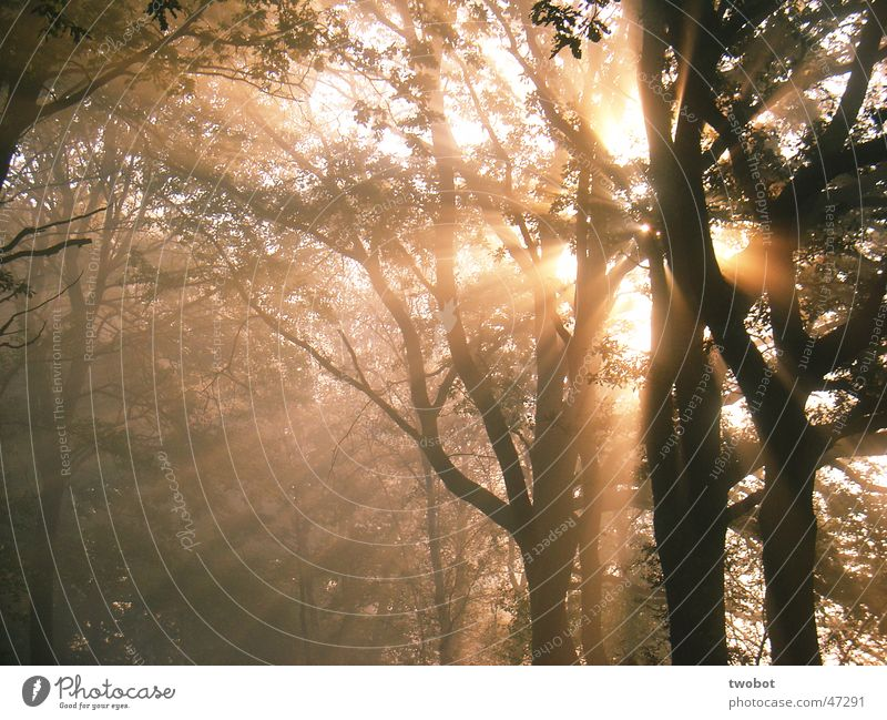 The sun explodes Sun Tree Forest Fog Sunrise Morning Light Autumn Relaxation Explosion Nature Wood flour Power Light (Natural Phenomenon) Energy industry