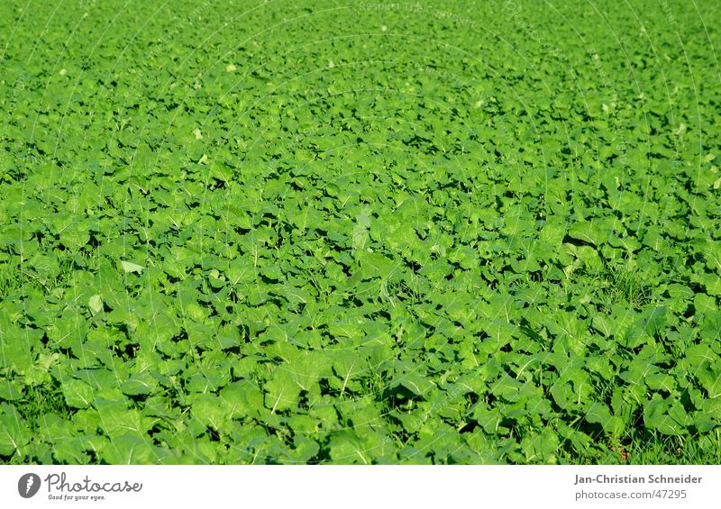 Sun Green Plant Leaf Bright Field Growth Agriculture