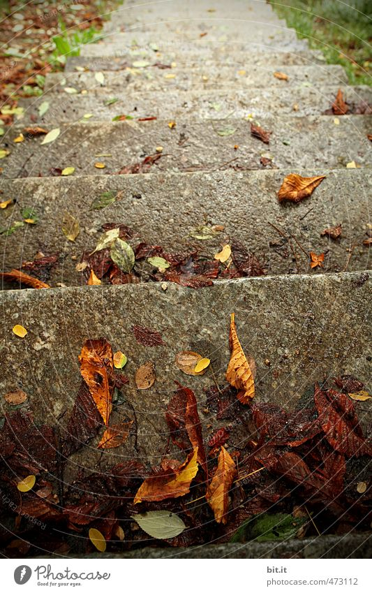 first autumn stage Environment Nature Autumn Wind Gale Garden Park Stairs To fall To dry up Sadness Transience Lanes & trails Leaf Autumn leaves Autumnal