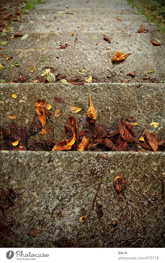 City Water Calm Leaf Cold Environment Autumn Gray Stone Line Garden Brown Lie Rain Stairs Climate