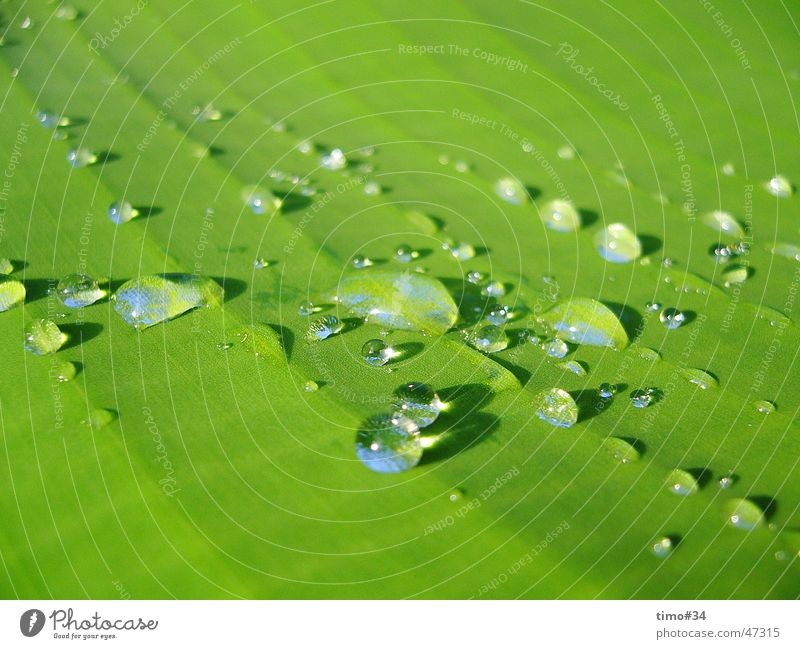Early morning dew on royal palm in the Dominican Republic_II Drops of water Water Rope