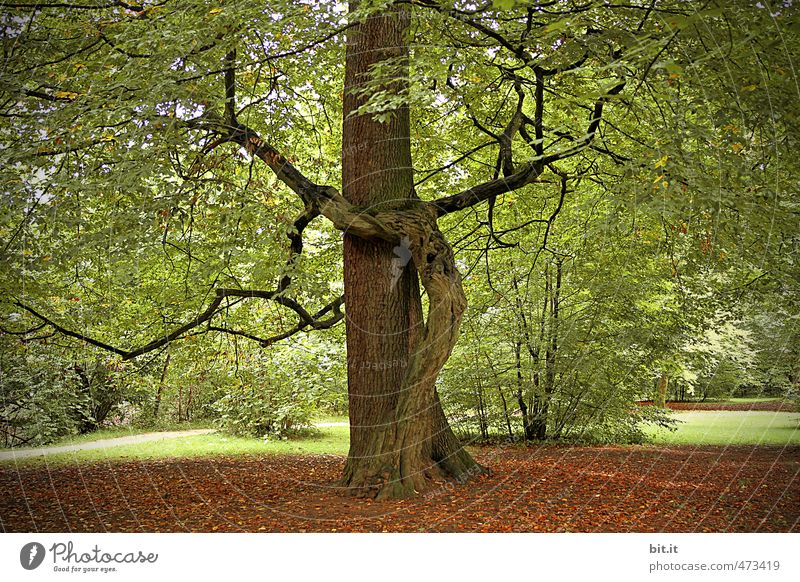 Yoga Tree Harmonious Relaxation Calm Meditation Environment Nature Elements Earth Garden Park Forest Green Trust Agreed Sympathy Together To console Wisdom Hope