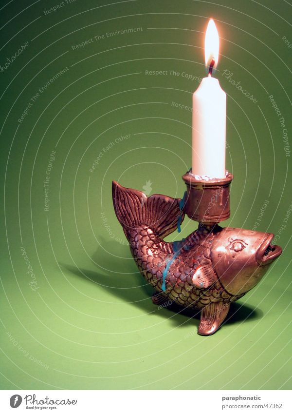 Green Relaxation Lighting Metal Background picture Blaze Fish Candle Drop Burn Banquet Flame Dusk Invitation Wax Meal