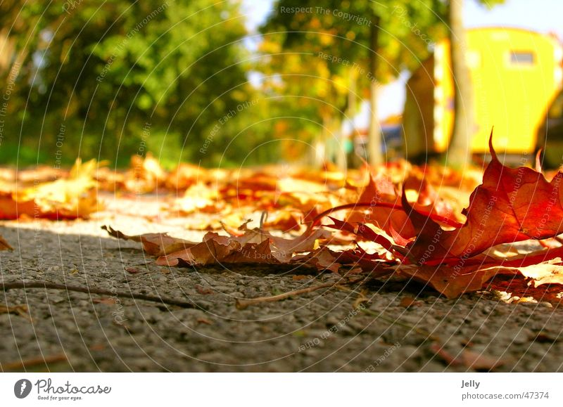 autumn is coming Red Green Yellow Blur Leaf Asphalt Tree Avenue Sidewalk To go for a walk Floor covering Street