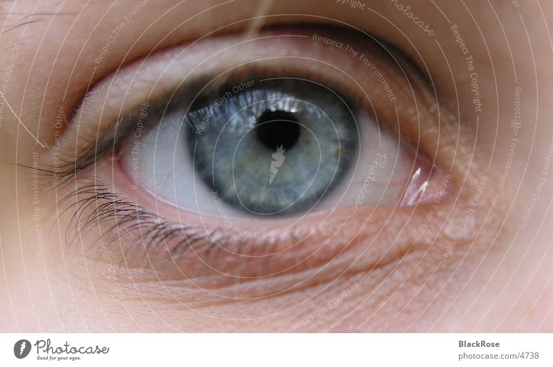 Human being Blue Face Eyes