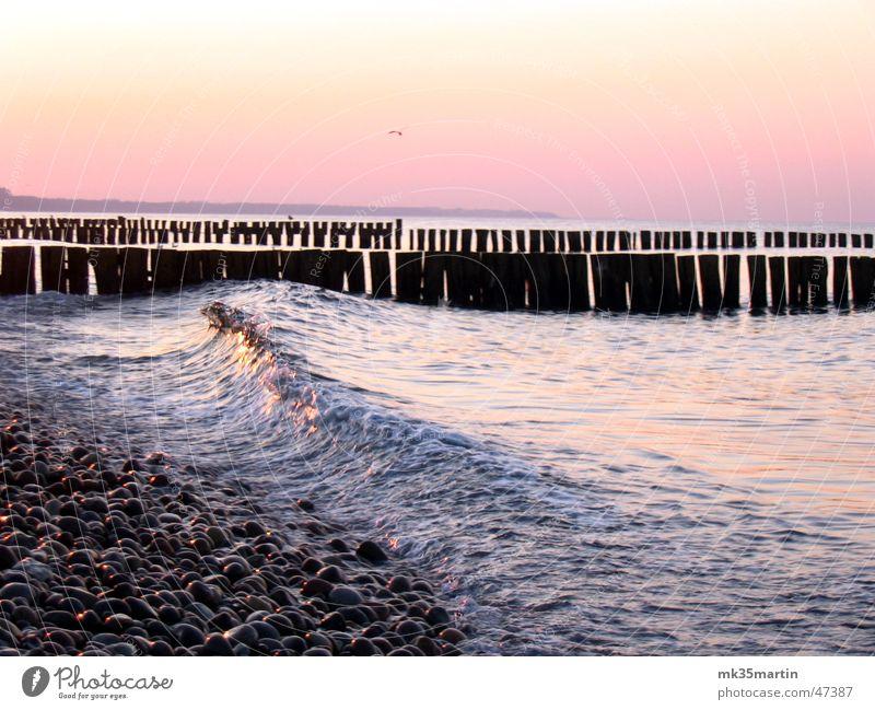 Water Ocean Bird Waves Romance Baltic Sea Seagull Late Break water