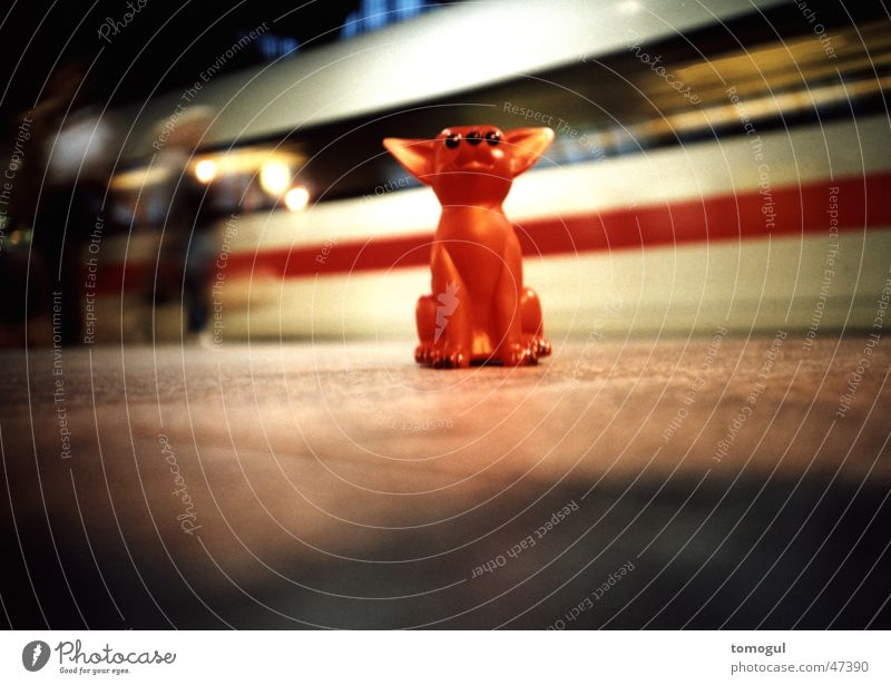 Vacation & Travel Train station Tourist Express train Platform Texas Chihuahua Desert Toy dog