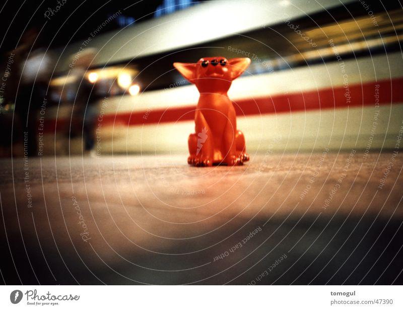 Vacation & Travel Train station Tourist Express train Platform Texas Chihuahua Desert Toy dog