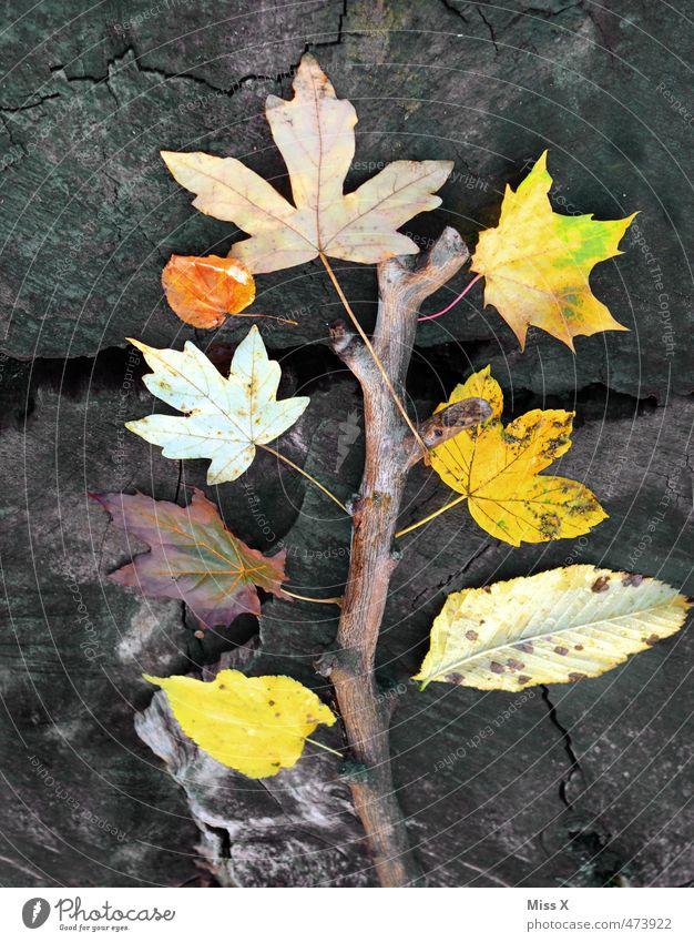 autumn tree Leisure and hobbies Handicraft Autumn Tree Leaf Multicoloured Yellow Autumnal colours Autumn leaves Automn wood Maple leaf Tree trunk Branch