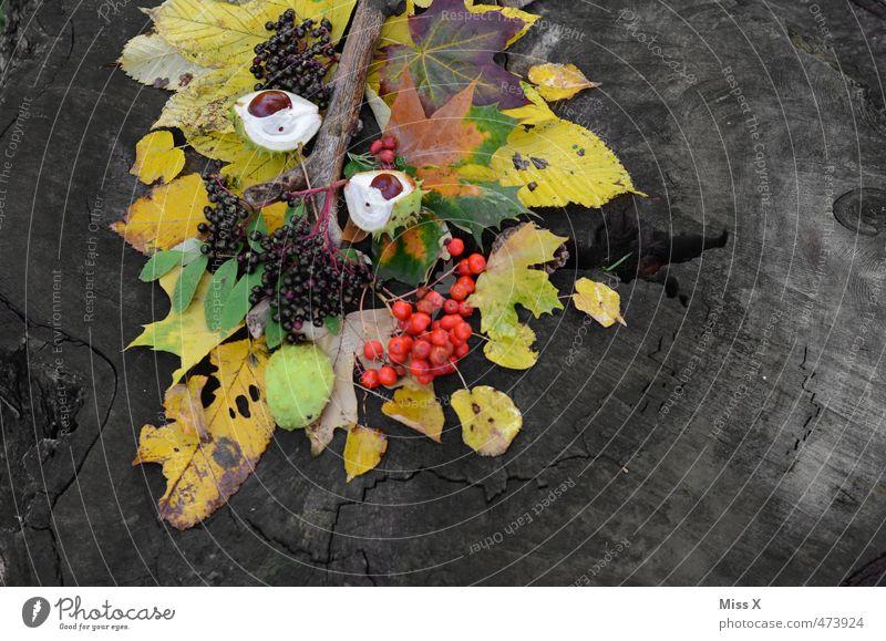 autumn Fruit Handicraft Autumn Tree Leaf Multicoloured Autumn leaves Autumnal Autumnal colours Automn wood Tree fruit Chestnut Elderberry Rawanberry