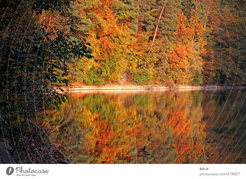 Nature Vacation & Travel Tree Relaxation Landscape Calm Leaf Yellow Environment Autumn Happy Lake Brown Moody Gold Tourism