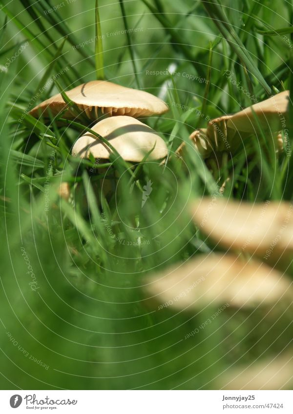 mushroom Depth of field Grass Meadow Forest Summer Collection Search Green Brown Delicious Poison Unhealthy Small Mushroom Macro (Extreme close-up) Close-up