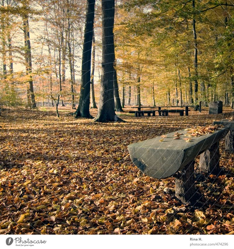 autumn Environment Nature Landscape Autumn Tree Forest Illuminate Natural Calm Wooden bench Picnic Autumn leaves Beech wood Square Tree trunk Colour photo
