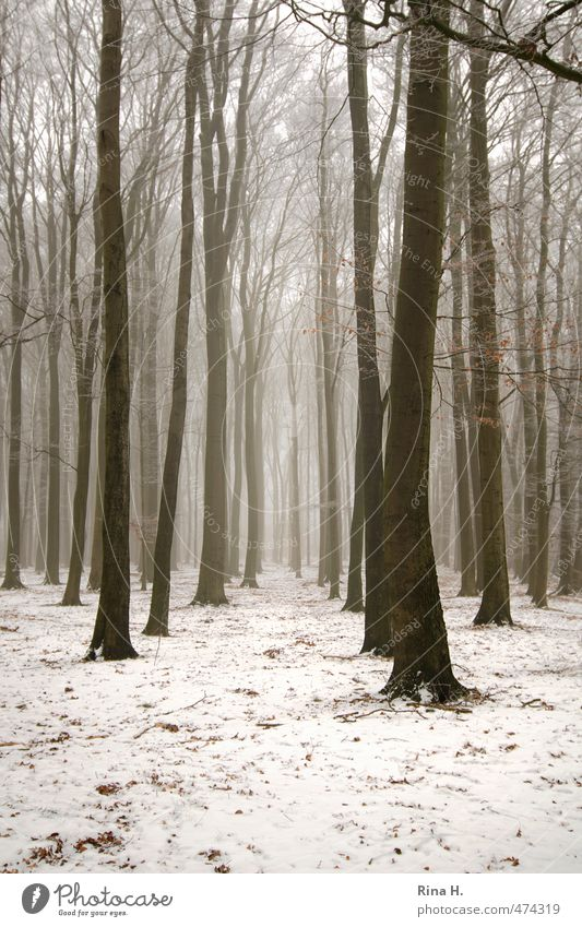 winter forest Environment Nature Landscape Winter Fog Snow Tree Forest Cold Natural Forest path Bleak Sadness Subdued colour Exterior shot Deserted