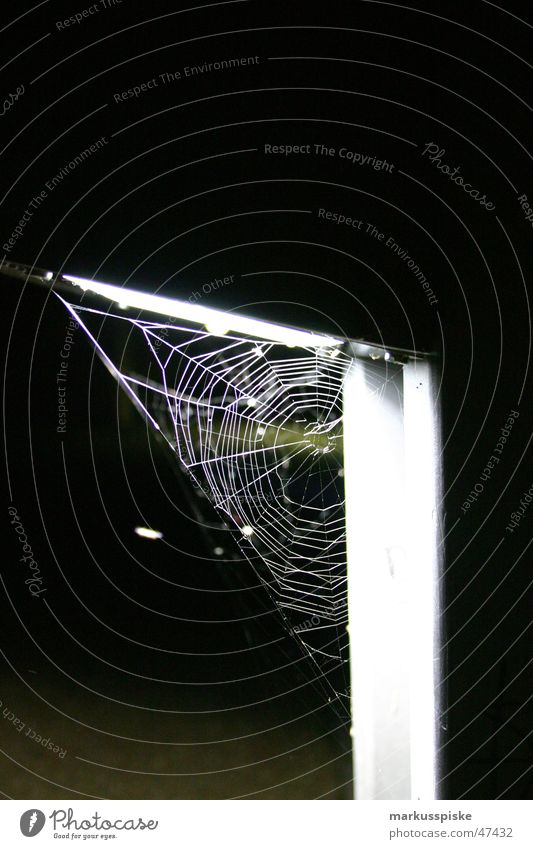 Lamp Net Insect Spider