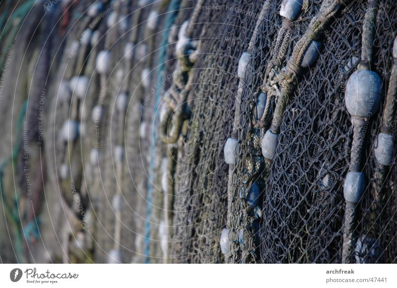 On the net Fishing net Schleswig-Holstein Arnis Schlei Coast Ocean Winter Net North Baltic Sea North Sea