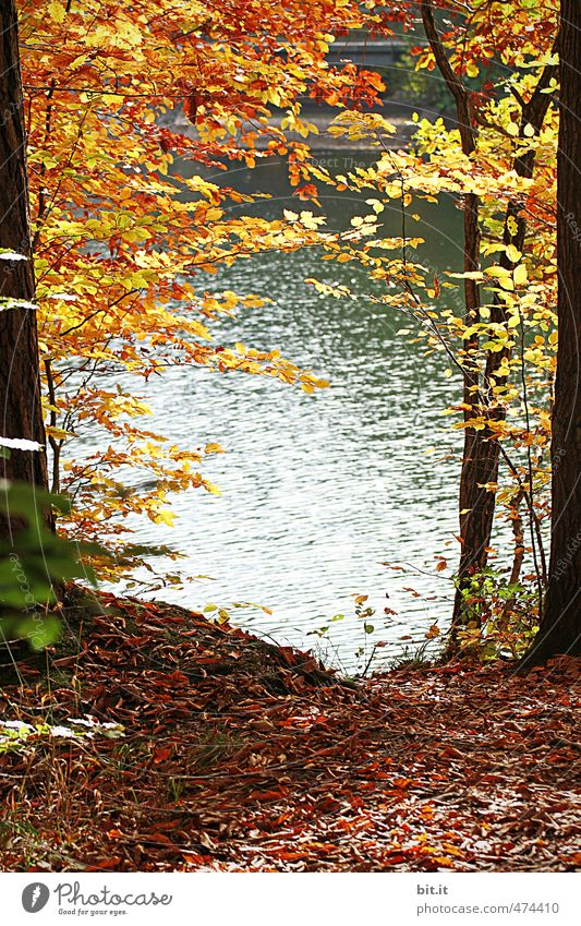 at Lake Bear Environment Nature Landscape Plant Elements Earth Water Autumn Climate Beautiful weather Coast Lakeside Pond Natural Warmth Moody Change