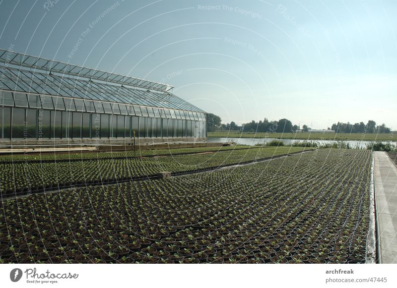 Sky Plant Autumn Garden Agriculture Horticulture Greenhouse Sapling Breed Building line