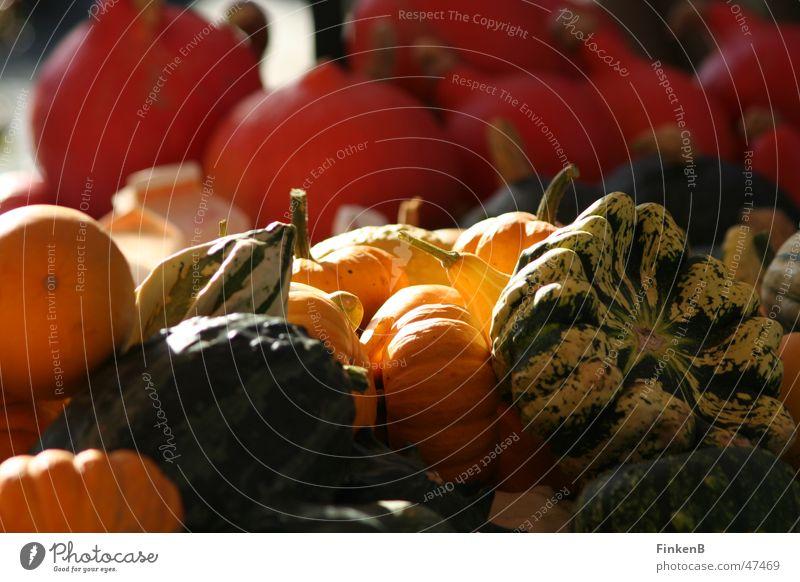 pumpkin Autumn Pumpkin Markets Sun