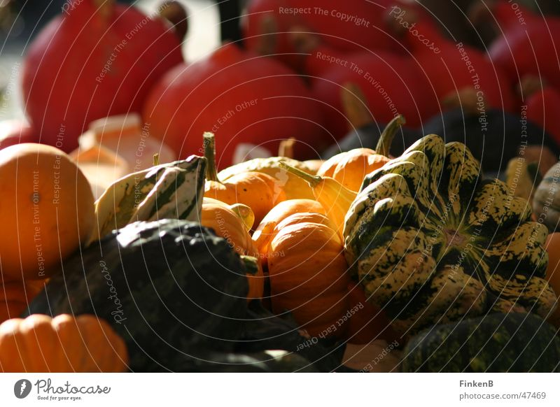Sun Autumn Vegetable Markets Pumpkin