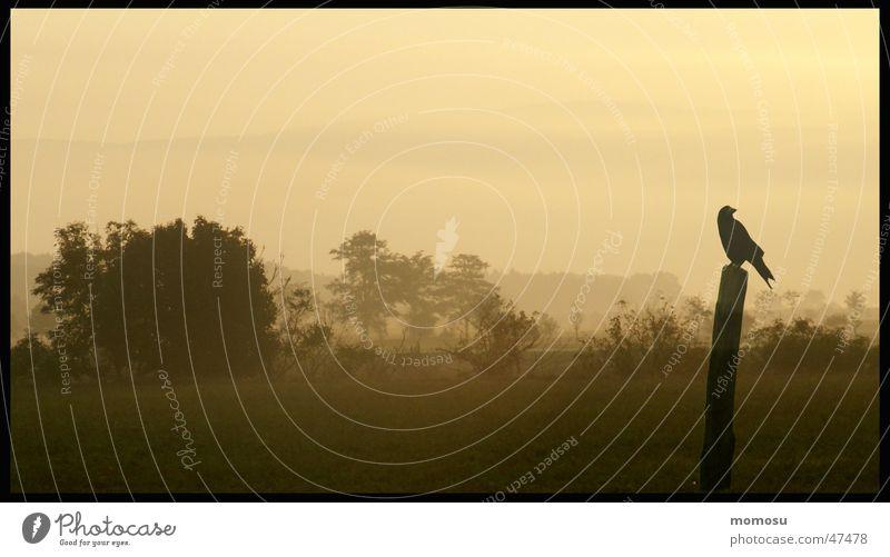 Far-off places Autumn Landscape Fog Bushes Crow