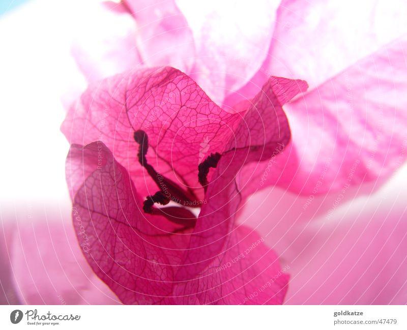 Beautiful Plant Summer Flower Relaxation Garden Blossom Style Spring Pink Elegant Esthetic Decoration Romance Wellness Delicate