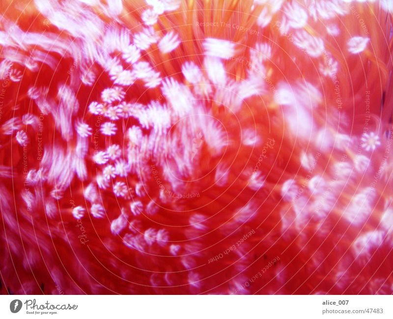 movement Aquarium Coral Wet Red Water Movement