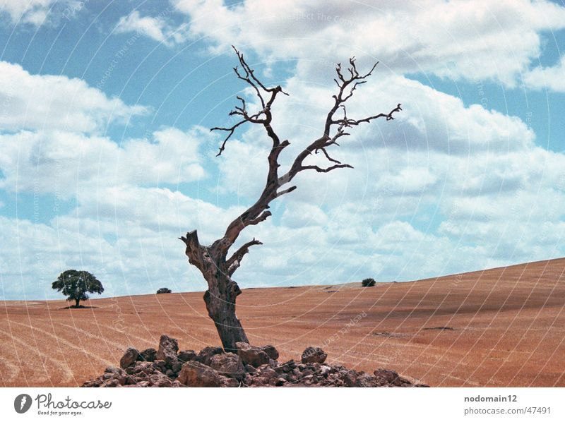 Nature Old Sky Tree Clouds Loneliness Meadow Death Landscape Field Poverty Grief Desert Americas Dry Spain