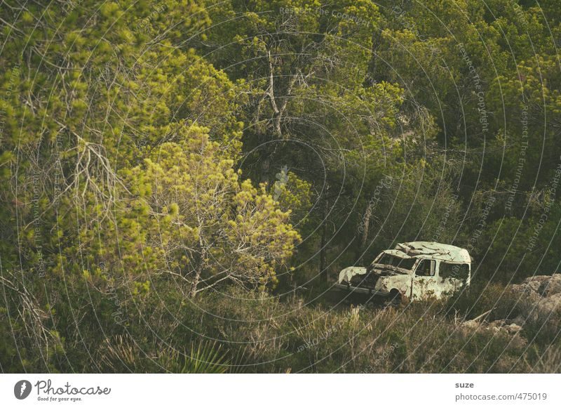 Old White Summer Environment Nature Landscape Tree Meadow Forest Means of transport Vehicle Car Vintage car Broken Retro Gloomy Dry Green Loneliness Past