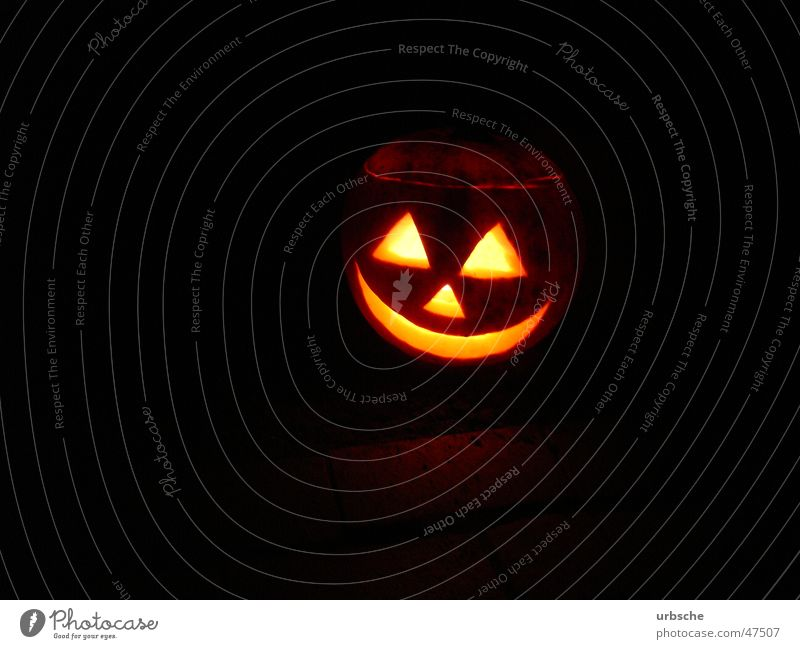 Pumpkin in the night Ghost festival Hallowe'en Neighbor Public Holiday Tradition Night Light Witch Autumn Rapes Black Tea warmer candle Helloween USA parties