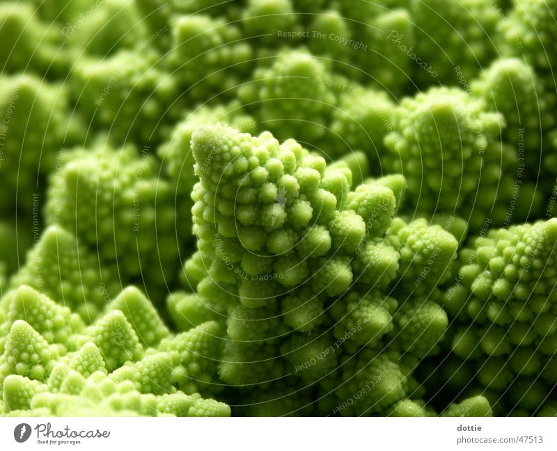 Romanesco Crater 2 Cauliflower Broccoli Green Cabbage Macro (Extreme close-up) Vegetable Point