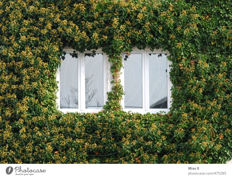 ivy house Flat (apartment) House (Residential Structure) Plant Bushes Ivy Growth Overgrown Virginia Creeper Sleeping Beauty Window Feral Colour photo