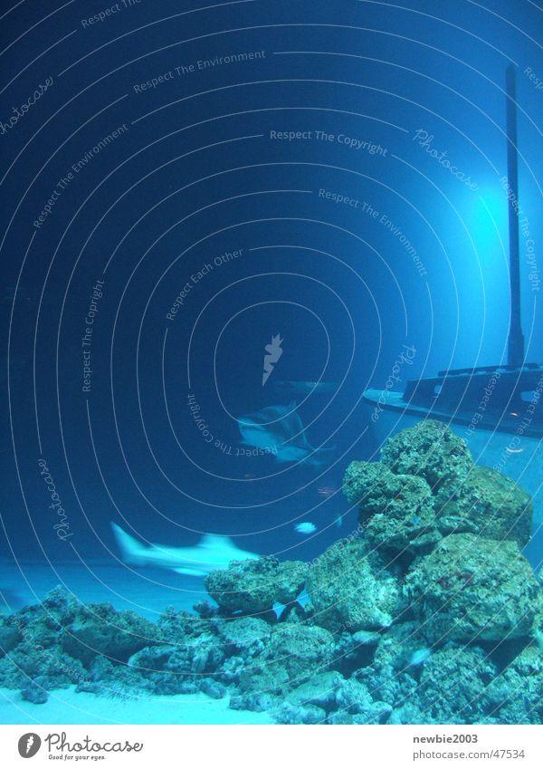 Blue Shark Ocean shark aquarium ship blue underwater