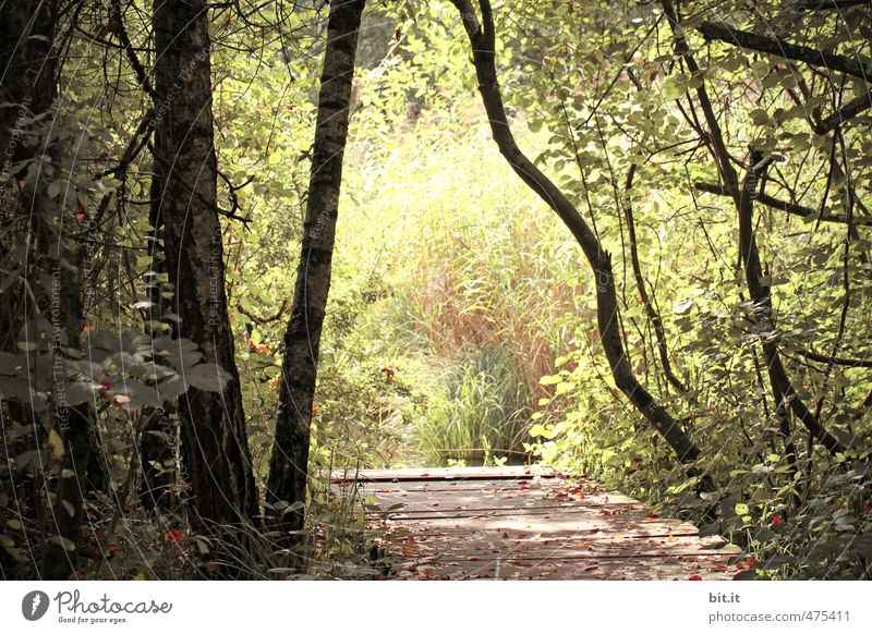 Bridge to the light Vacation & Travel Tourism Trip Environment Nature Landscape Plant Beautiful weather Foliage plant Park Forest Pond Lake Green Loneliness