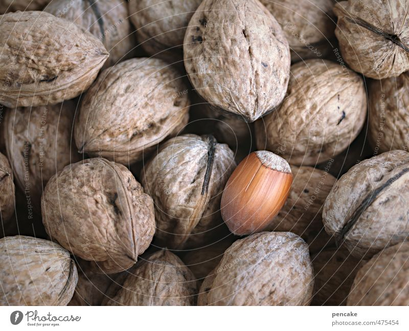 Inclusion Food Culture Nature Sign Discover Wait Authentic Healthy Uniqueness Society Nut Hazelnut Walnut Autumn Harvest Thanksgiving Individual Exceptional