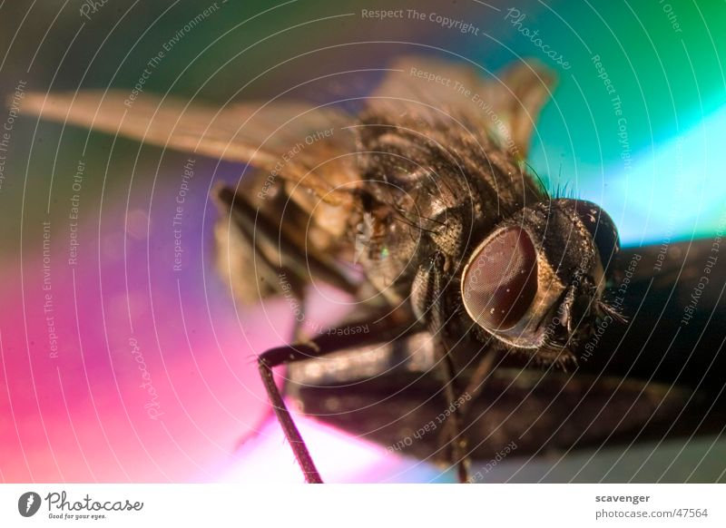 bow tie Insect Multicoloured Color gradient Small Large Dust Fly Flying Legs Eyes face Colour Macro (Extreme close-up) Microphone Hair and hairstyles Wing