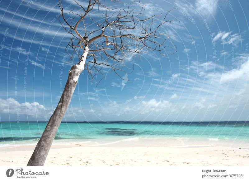 Sky Nature Vacation & Travel Blue Tree Ocean Relaxation Calm Clouds Beach Travel photography Sand Horizon Idyll Island Asia