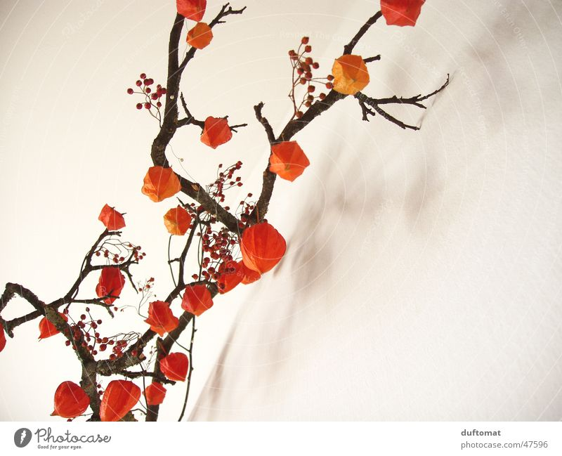 Beautiful Calm Senior citizen Loneliness Autumn Contentment Orange Fruit Romance Clean Pure Branch Transience Idyll Botany Tradition