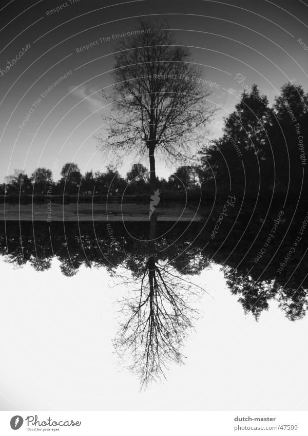 Around what? Mirror Tree Photography Summer Netherlands Lake Black White Brook Water mirror image River inversely Sky