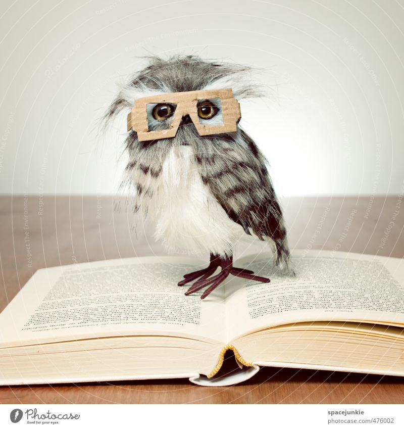 reading owl Animal Owl birds 1 Stationery Paper Toys Doll Observe Exceptional Nerdy Curiosity Yellow Beautiful Book Reading Eyeglasses Person wearing glasses