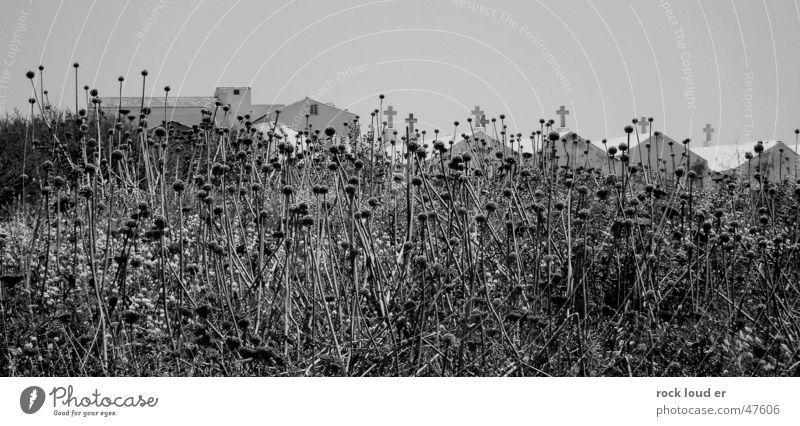 Condition Death Crypt Black White Stylistic Bonifacio Corsica Nature Landscape Back