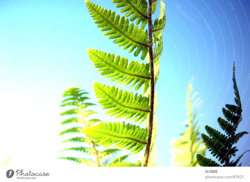 of the fern in the right light. Flower Yellow Green Pteridopsida Sky Plant