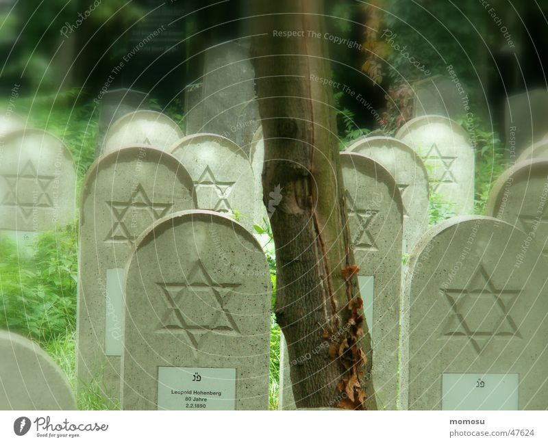 Tree Autumn Fog Vienna Cemetery Tombstone Star of David Central cemetery