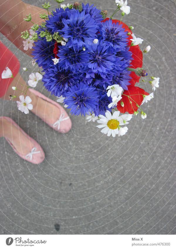 Human being Summer Flower Love Spring Blossom Feasts & Celebrations Legs Feet Birthday Wedding Blossoming Gift Romance Bouquet Infatuation