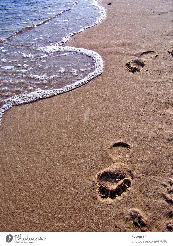 footsteps Stride Beach Tracks Footprint Going Summer Brown Feet Water Walking Pistil Sand Swimming & Bathing Sun Barefoot