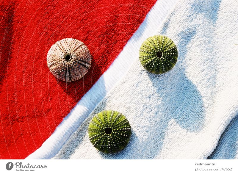 Bath towel with sea urchin skeleton Sea urchin Seafood Skeleton Wonder Ocean Lake Summer Red White Green Relaxation Dive Marine animal Microphone Colour Shadow