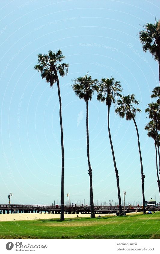 Sky Tree Sun Ocean Summer Beach Lake Sand USA Americas Palm tree California St. Barbara