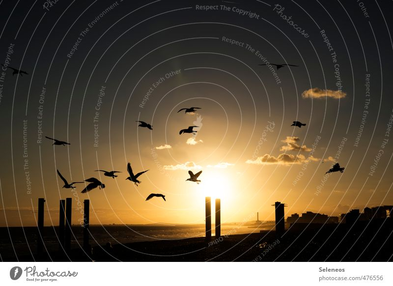 Sky Nature Vacation & Travel Sun Ocean Clouds Animal Far-off places Environment Coast Freedom Natural Horizon Bird Flying Gold