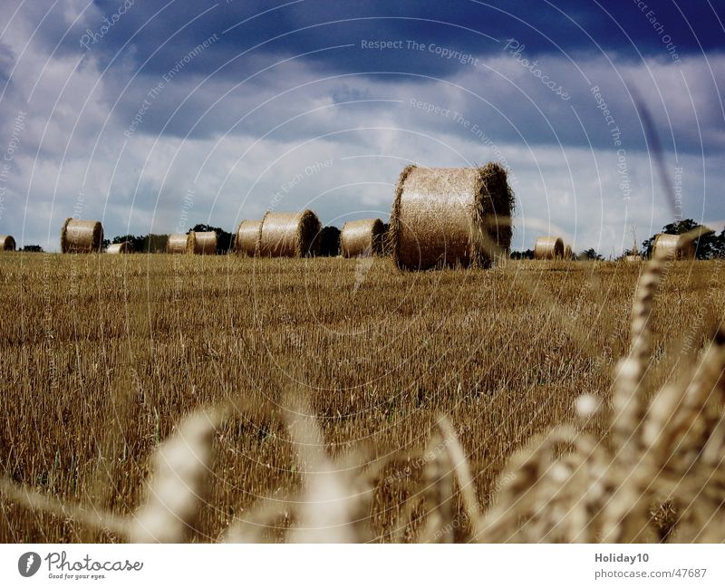 Landscape Field Background picture Round Harvest Blade of grass Rügen Straw Bale of straw Clouds in the sky Stubble field
